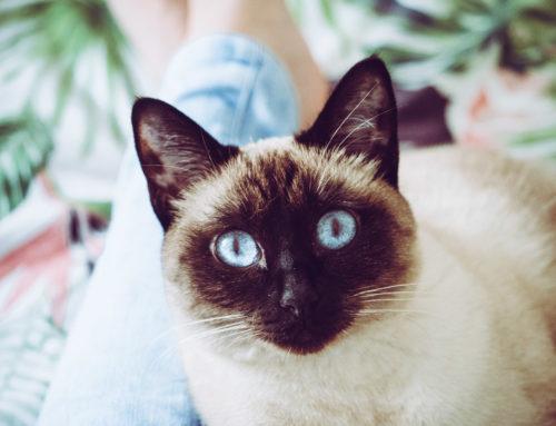 Kot – najlepszy przyjaciel człowieka