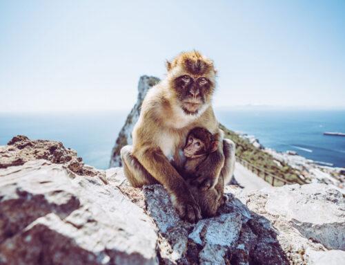 Hiszpania (Andaluzja) w 4 dni – Marbella, Gibraltar, Malaga